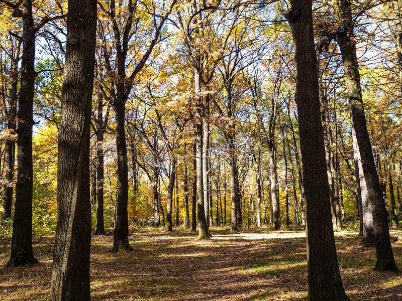 向草甸的道路在橡木树丛由太阳点燃了在公园 免版税库存图片