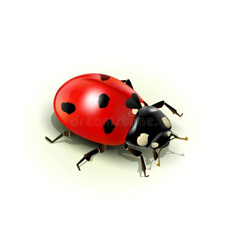 向量瓢虫,查出 库存例证