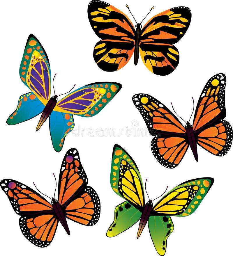 向量蝴蝶 免版税库存图片
