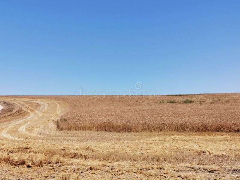 向麦田和天空的路 免版税库存图片