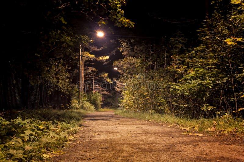 图片 包括有 自治权, 场面, 路径, 户外, 森林, 空间, 人们, 塔林图片