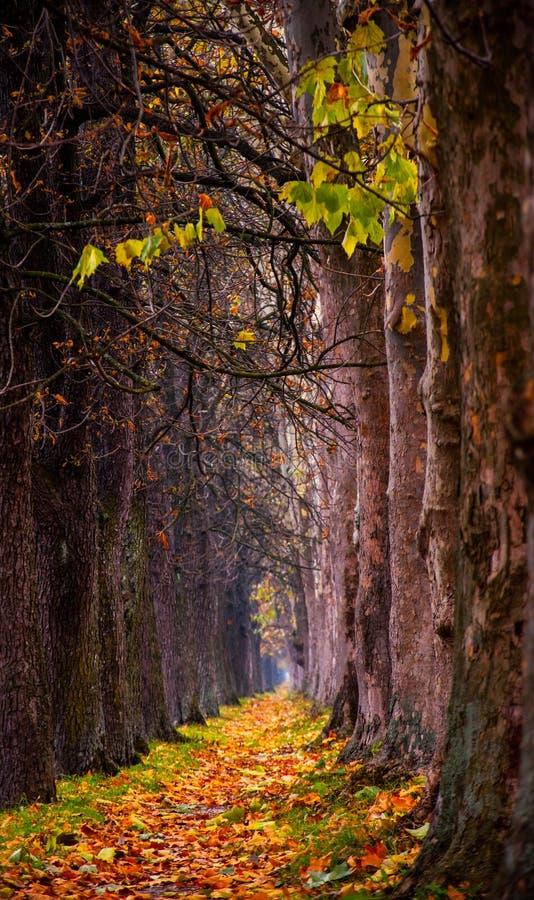 向Vrelo Bosne的道路 免版税库存照片