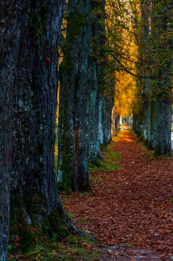 向Vrelo Bosne的道路 库存照片