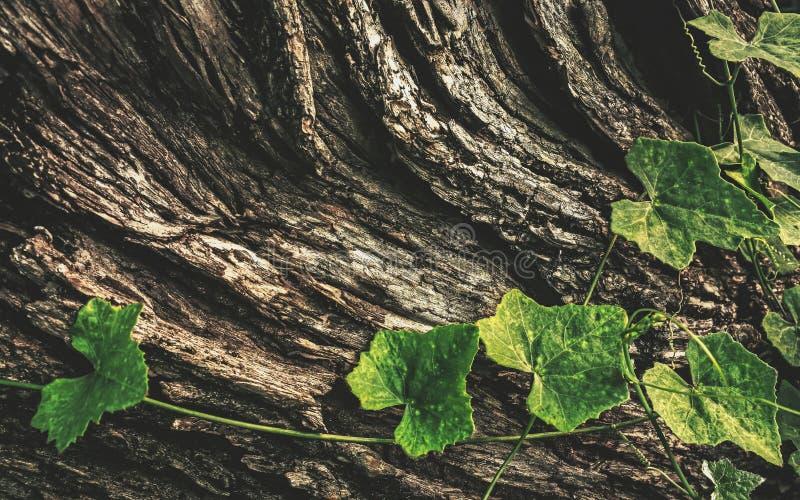 吠声和叶子 免版税库存图片