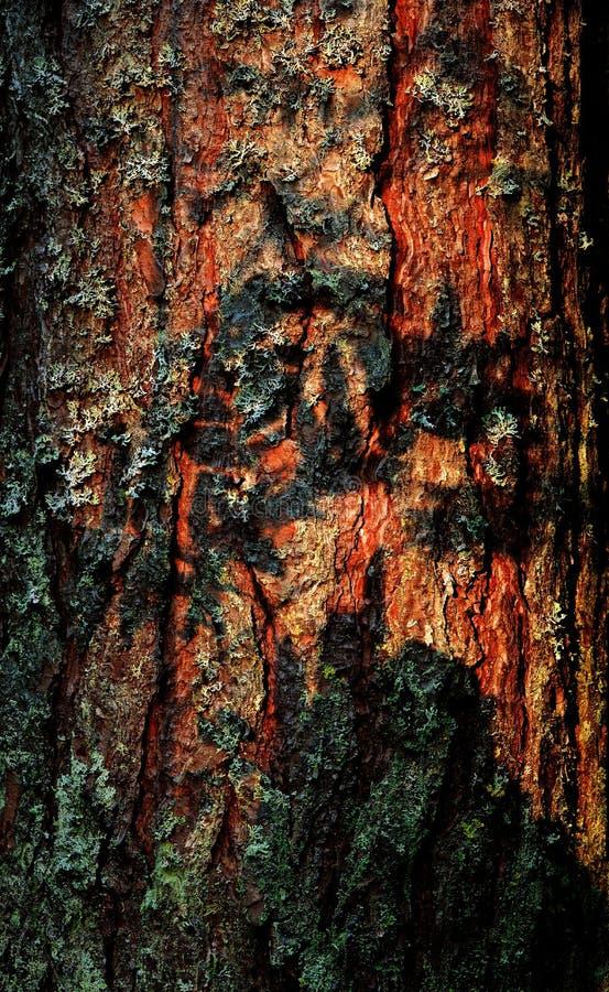 吠声毛皮结构树 免版税库存图片