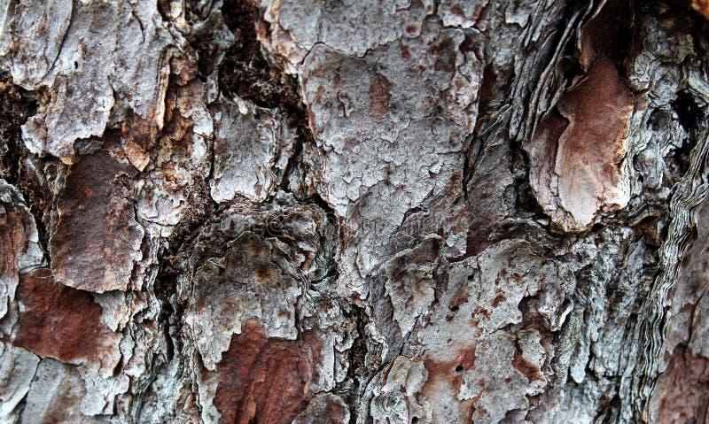吠声的特写镜头纹理在树的 免版税图库摄影