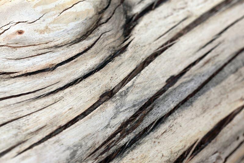 吠声结构树 库存图片
