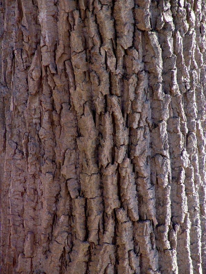 吠声详细资料结构树 库存图片