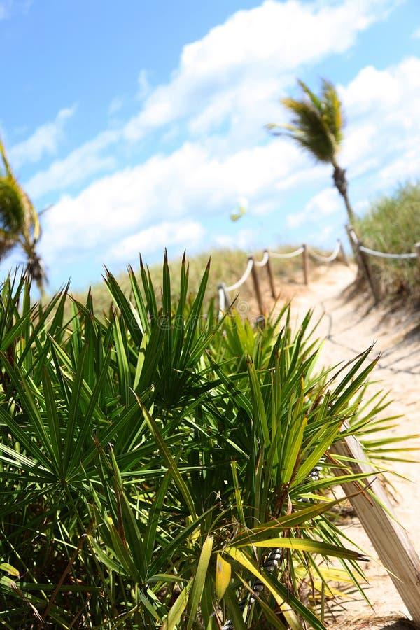 含沙海滩的路径 免版税库存图片
