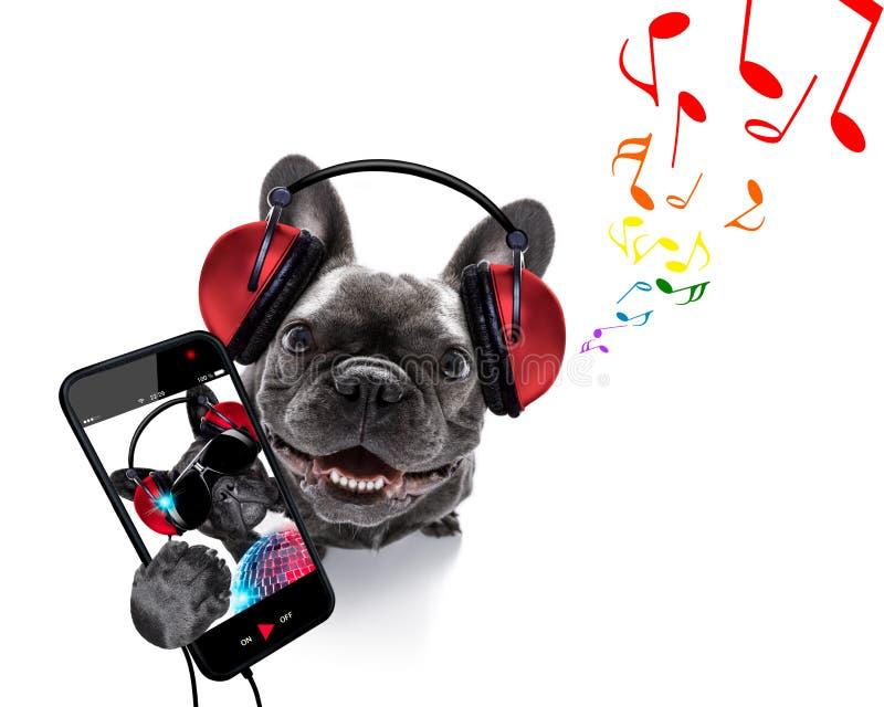 听到音乐的狗 免版税库存照片