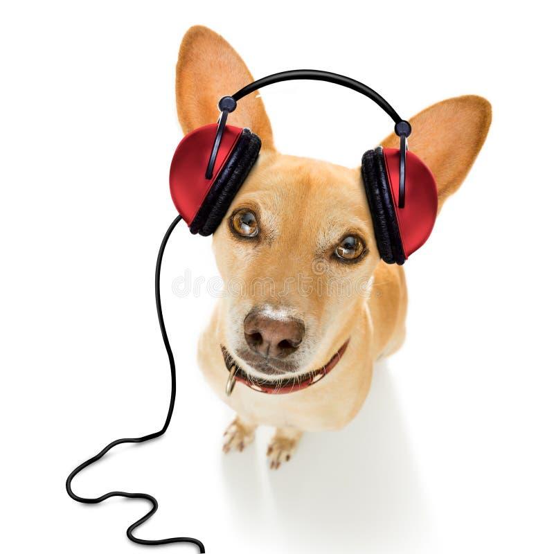 听到音乐的狗 库存图片