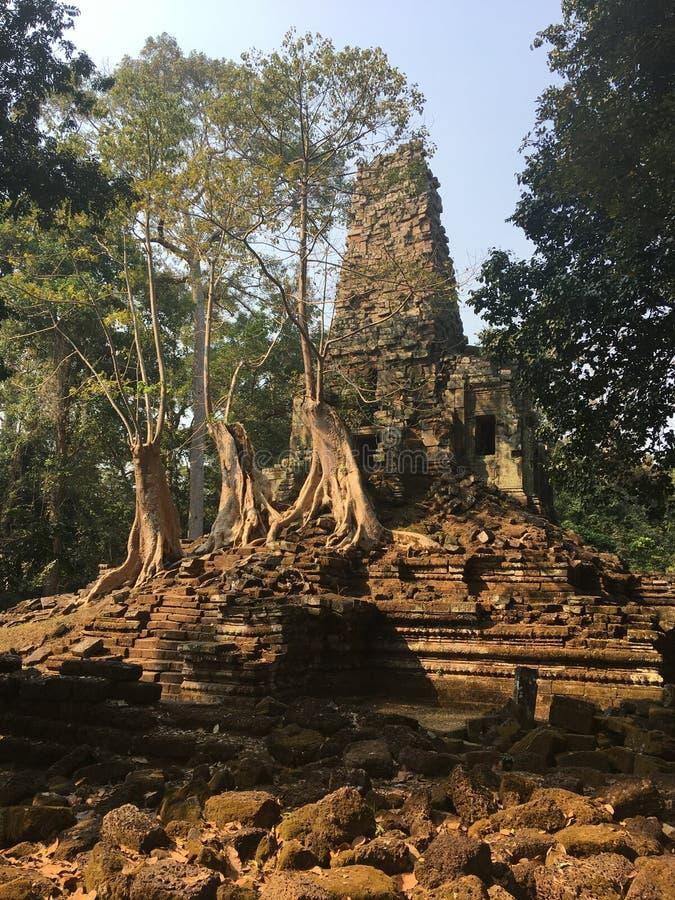 吴哥窟在暹粒市,柬埔寨吴哥窟是复杂最大的印度寺庙和最大的宗教纪念碑在世界上 Preah Palilay高棉古老废墟向寺庙扔石头长满与根和巨人树 免版税库存照片