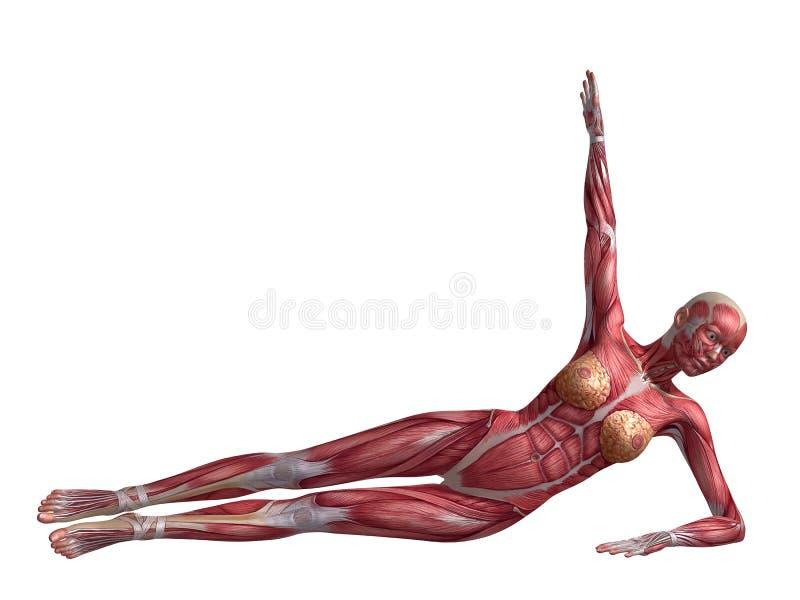 吸收女性锻炼 向量例证
