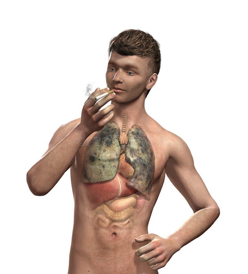 吸烟者的肺 向量例证