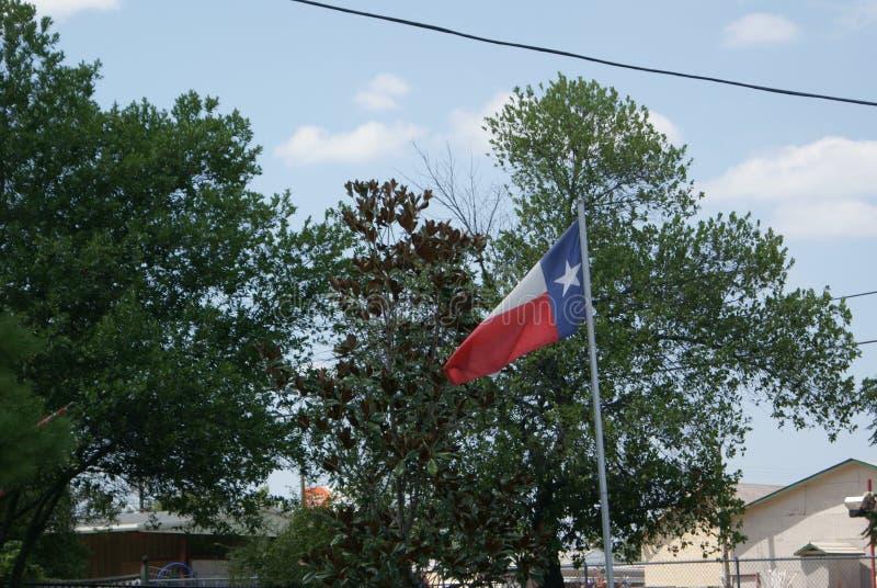 吹在与树的风的得克萨斯旗子在背景中 库存图片