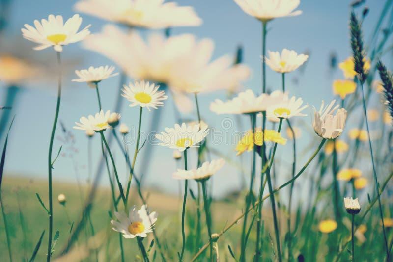 吹在微风的夏天草 免版税库存图片