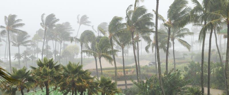 吹在风和雨中的棕榈树作为飓风临近 免版税库存图片