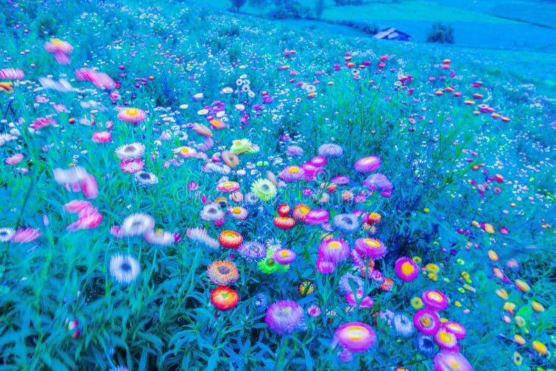 吹在风在月光下,春天抽象派的开花的雏菊行动迷离  r 蓝色口气 向量例证