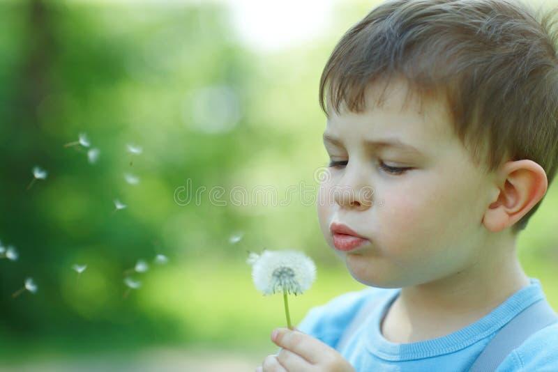 吹的儿童dandellion种子 免版税库存照片
