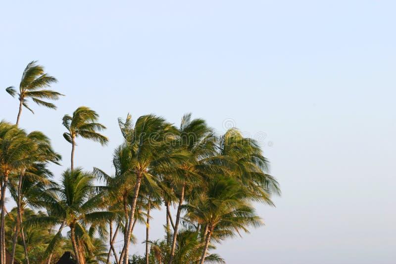 吹的棕榈树风 库存图片