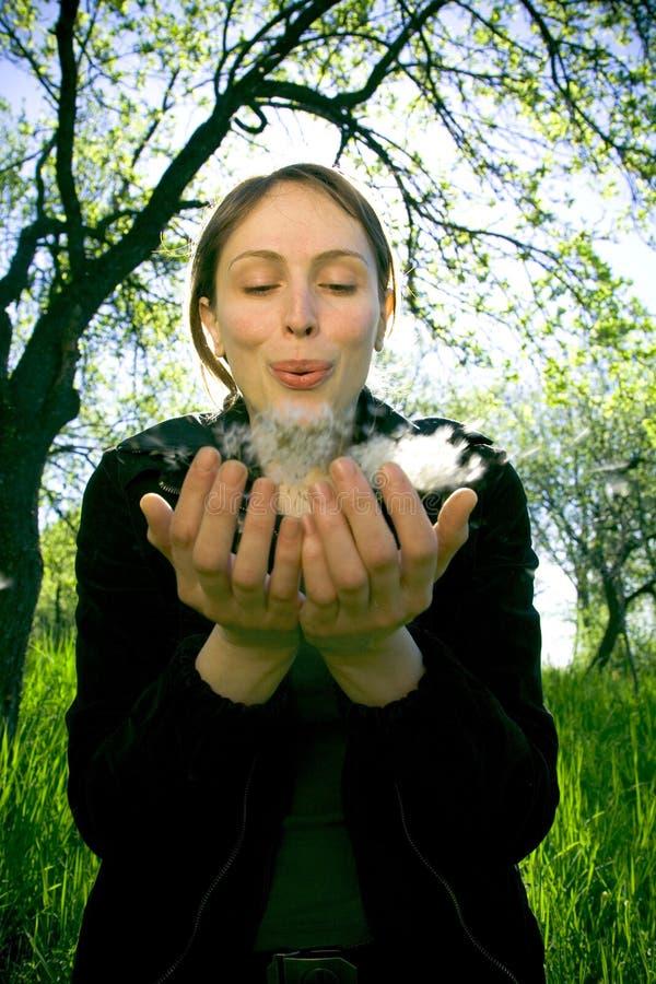 吹的蒲公英女孩种子 图库摄影