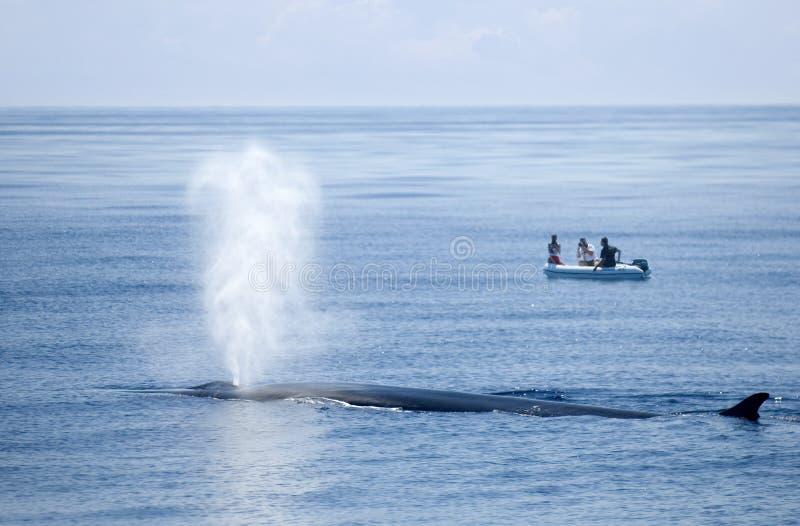 吹的鲸鱼 免版税库存照片