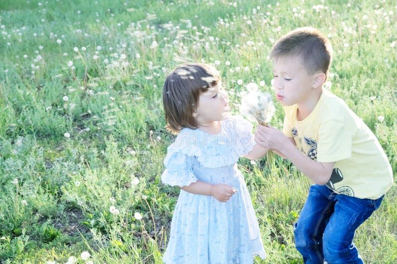 吹蒲公英的孩子在公园开花在夏天 愉快的逗人喜爱的享受自然的男孩和小女孩 库存照片