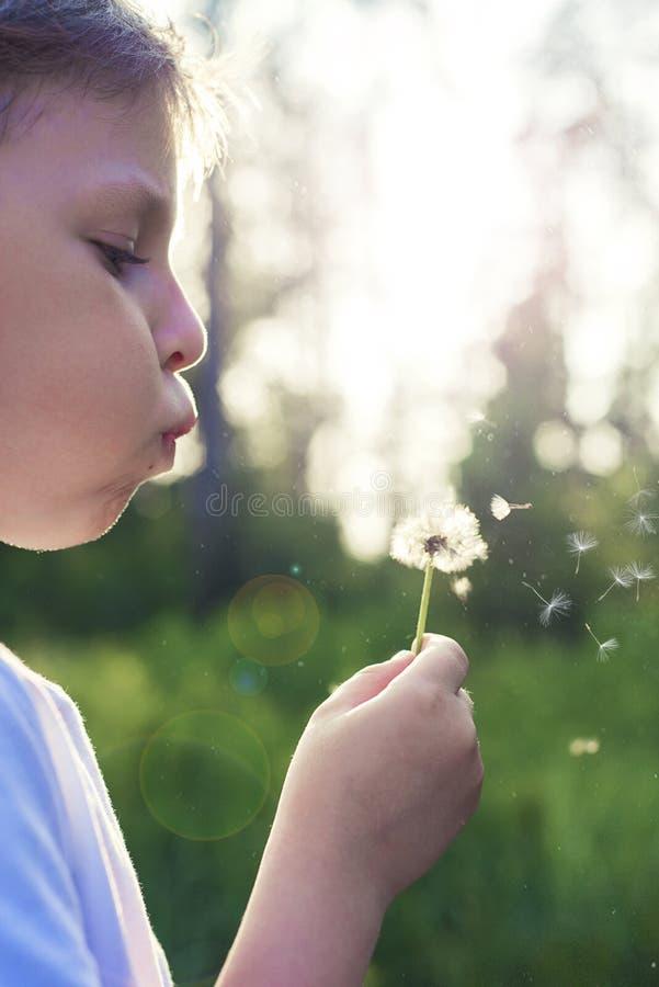 吹蒲公英的男孩在日落美好的光 免版税图库摄影