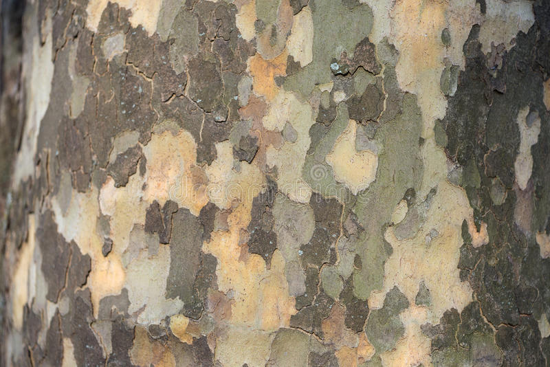 呈杂色的树皮和树干 库存图片