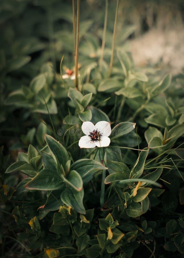 呈绿色绿色蕨在有花的挪威 库存图片