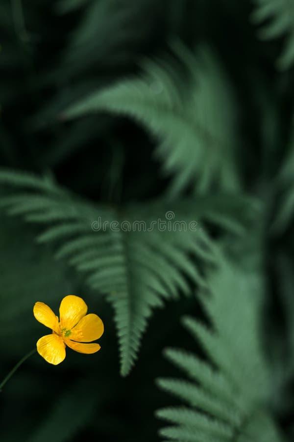 呈绿色绿色蕨在有黄色花的挪威 免版税图库摄影