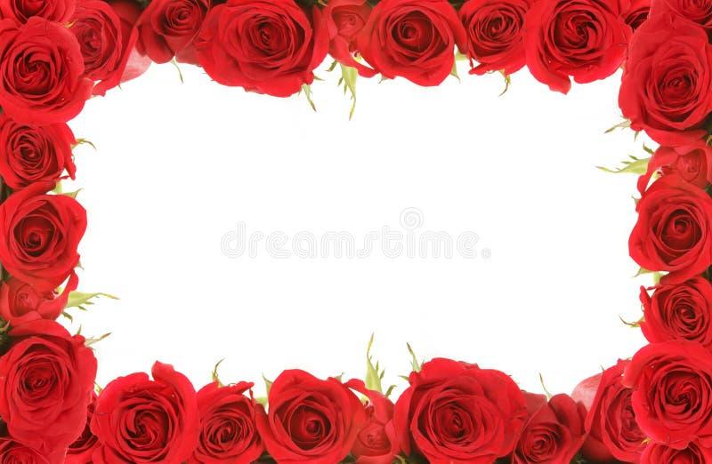 周年纪念构成的红色玫瑰华伦泰 库存图片