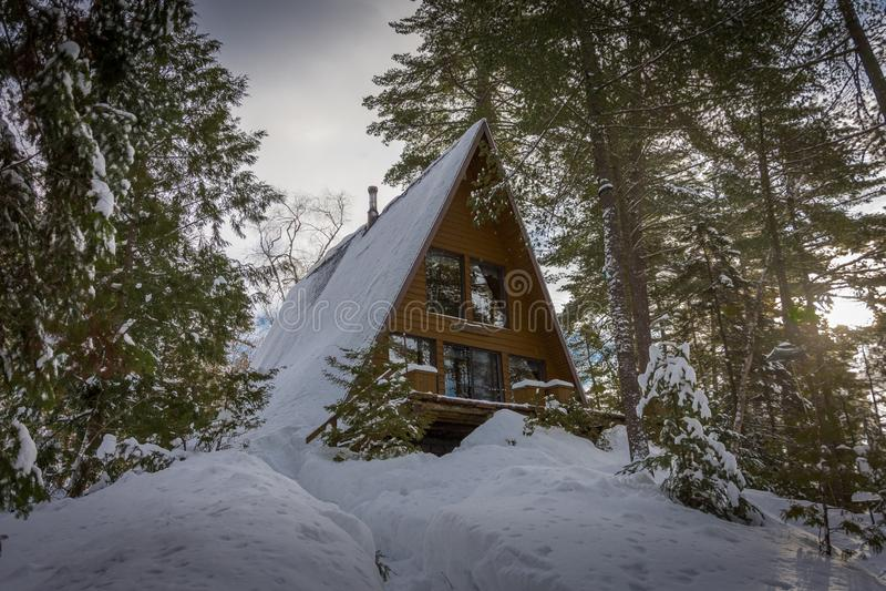 周末在森林里在冬天 库存照片