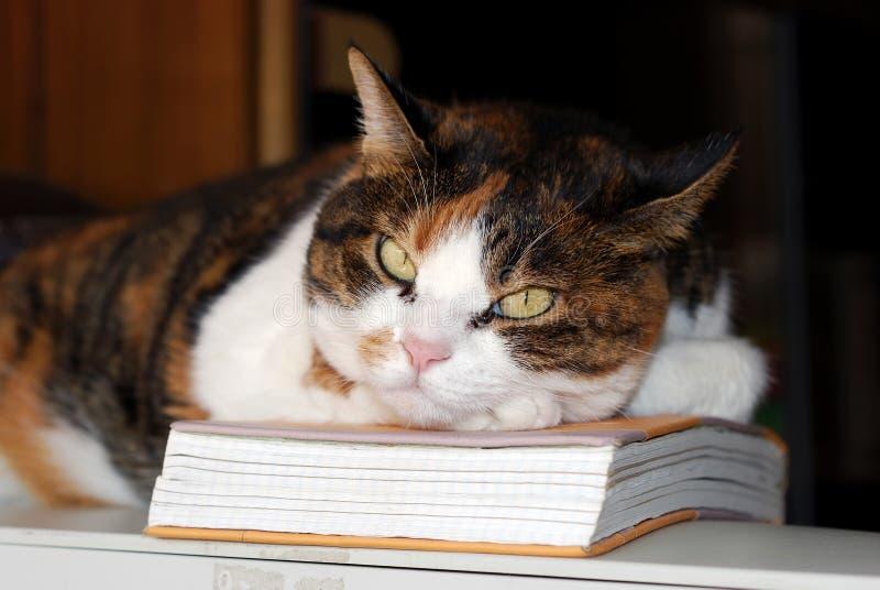 周道的猫 免版税库存照片