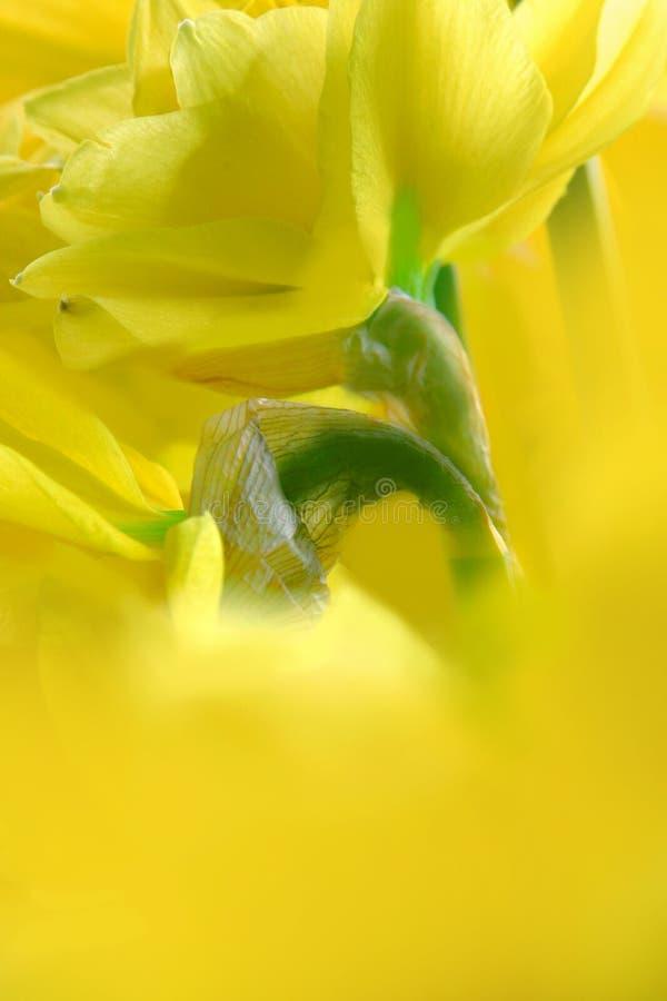 呼吸春天 库存照片