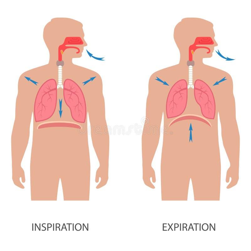 呼吸的人的膜片 库存例证