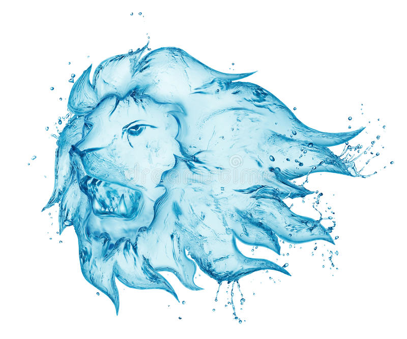 咆哮狮子水飞溅 库存照片
