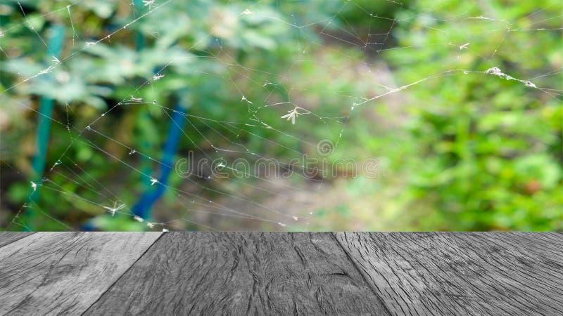 黑和与在蜘蛛网的板条与迷离绿色植物 免版税图库摄影