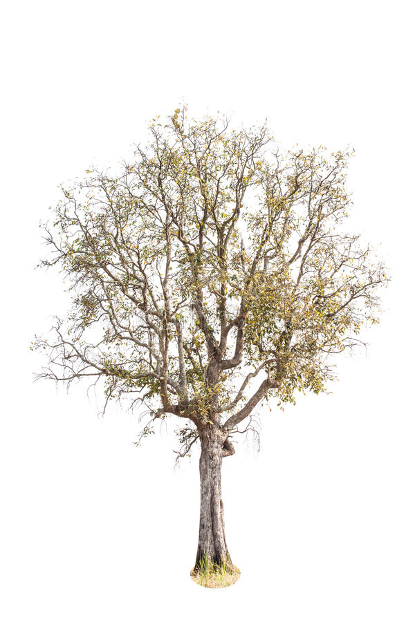 死和干燥树 免版税图库摄影