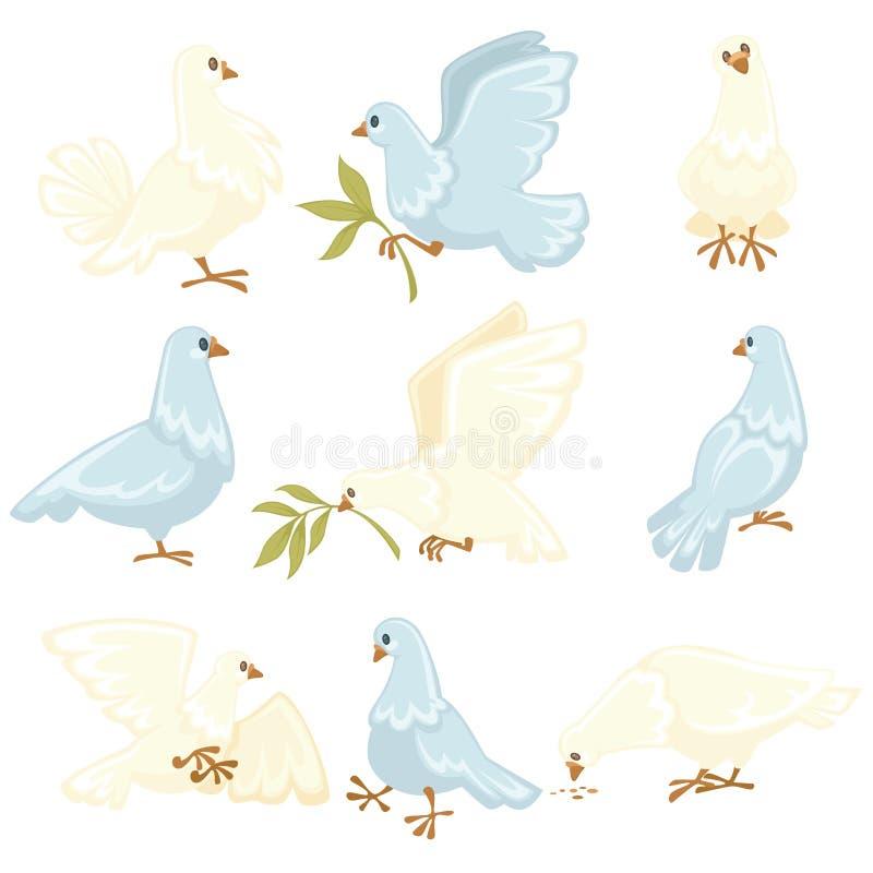 和平标志白色鸠或鸽子被隔绝的动物传染媒介橄榄树枝飞鸟翼飞行全身羽毛植物枝杈纯净 皇族释放例证