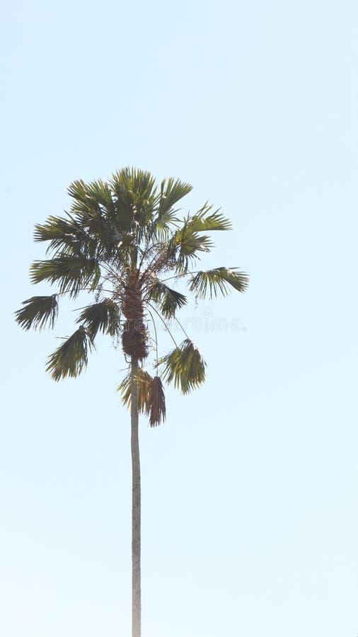 和平棕榈树消极空间 免版税库存图片