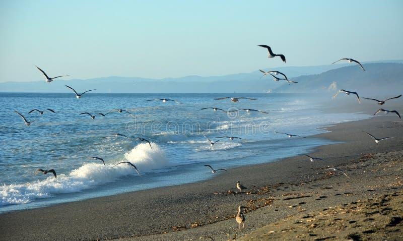 和平的海岸 库存图片