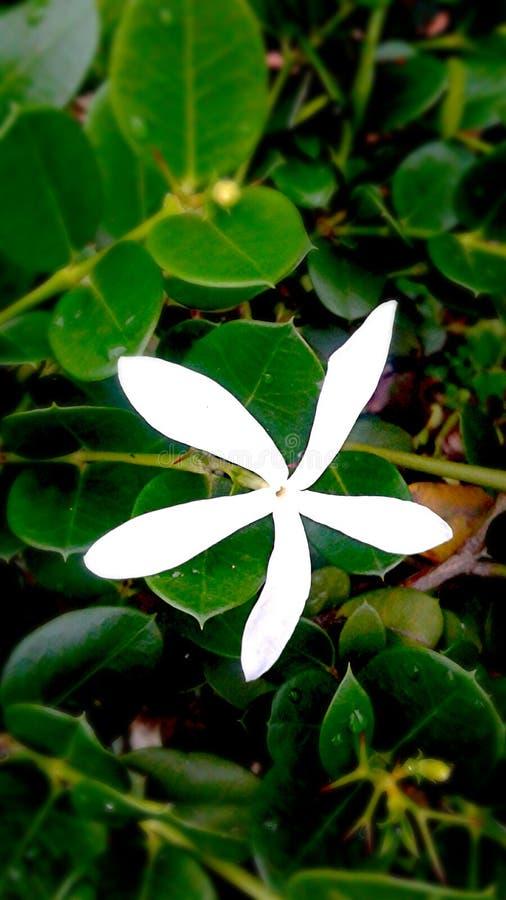 和平的白色 库存图片