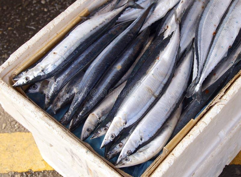 和平的长凳竹刀鱼 免版税图库摄影
