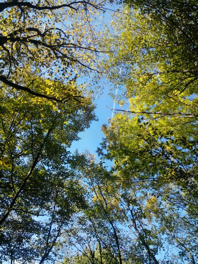 和平蓝色网状结缔组织的森林 免版税库存照片