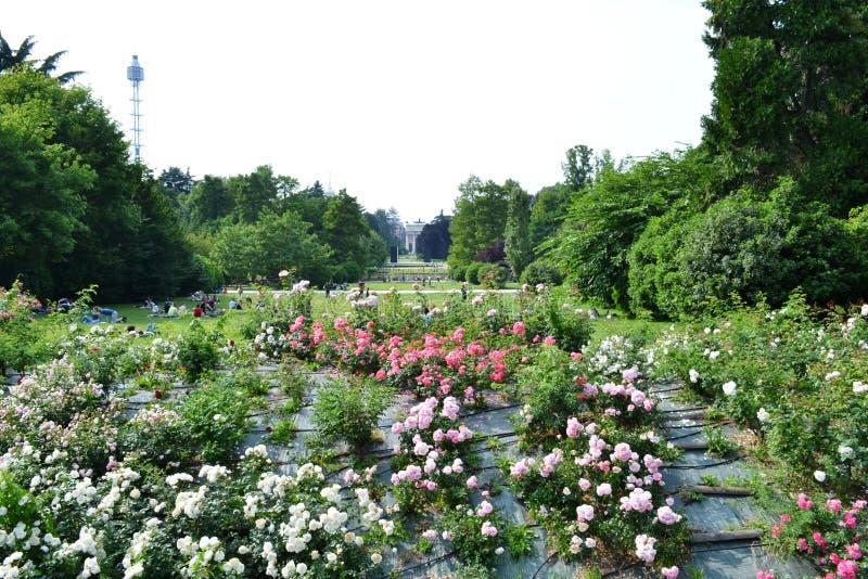 和平辛普隆公园,森皮奥内公园玫瑰曲拱和灌木在米兰 图库摄影