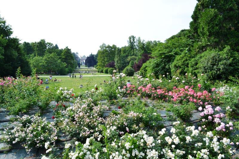 和平辛普隆公园,森皮奥内公园玫瑰曲拱和灌木在米兰 免版税库存照片