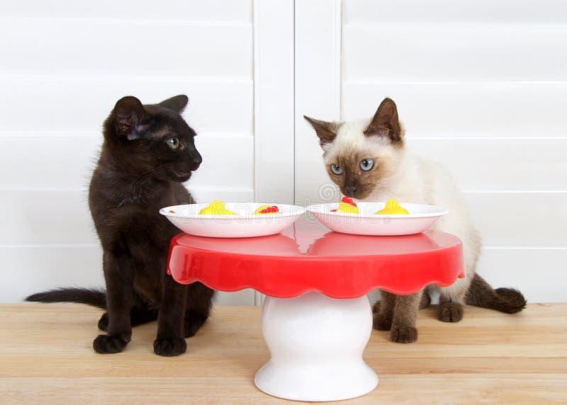 黑和暹罗小猫在小桌上 免版税库存图片