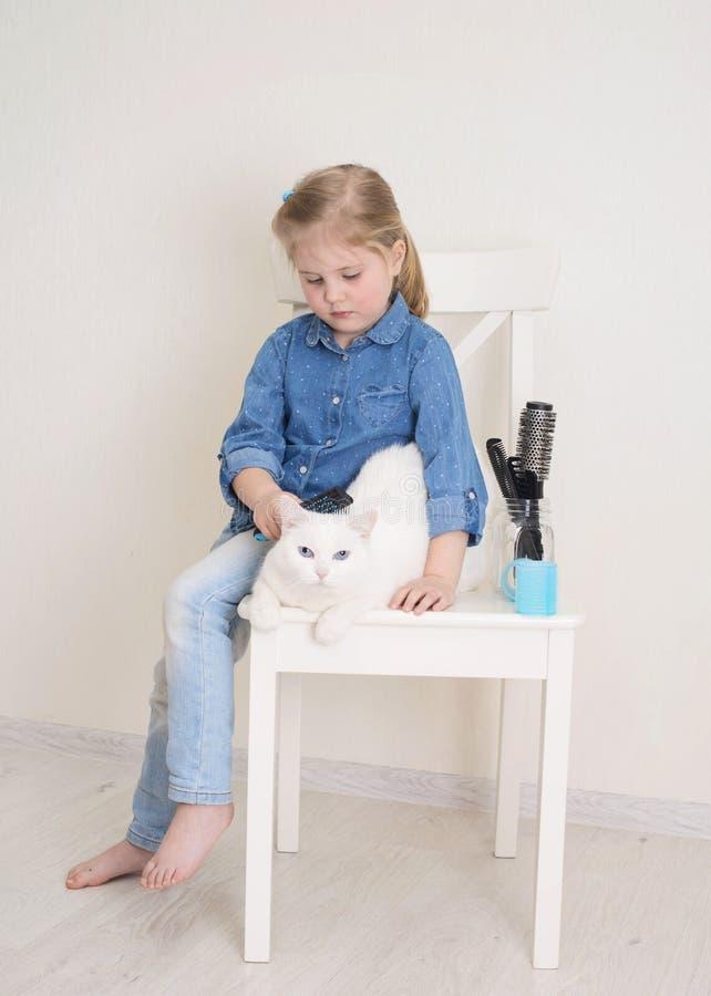 和白猫一起玩宠物沙龙或理发师的小女孩 小孩梳着宠物,试着用彩色的毛发卷发器 免版税库存照片