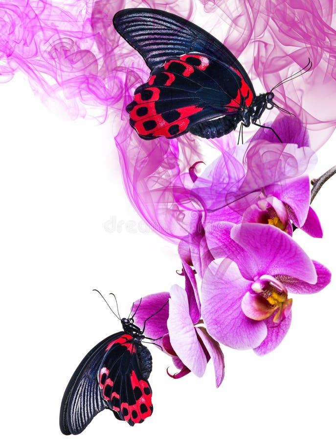 黑和红色热带蝴蝶坐兰花 库存图片